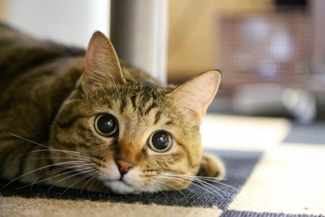 猫が好きすぎて独立開業!でもうまくいきません・・・